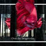 photoshop講座【超初心者向け】暑い日が続いているから「1min. Photoshopで森を泳ぐ熱帯魚」をやってみました。